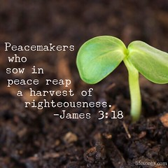 """LifeSongs Uplifting Word: """"Peacemakers who sow in peace reap a harvest of righteousness."""" - James 3:18  #Bible #quotes #inspirational #motivational #positive #truth #uplifting #hope #God #plant #grow #peace #sow #reap #harvest #righteousness #Christian #r"""