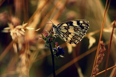 .... (zool18) Tags: summer color macro nature beauty canon butterfly garden insect amazing awesome 7d mark2