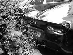 Pretty, Pretty Flowers. (Comiccreator24) Tags: uk travel flowers england blackandwhite bw plant london car photography unitedkingdom creative ferrari stems supercar dorchester gtb londonengland carspotting rwd 488 midengine creativephotography rearwheeldrive londoncarspotting carsoflondon ferrari488gtb