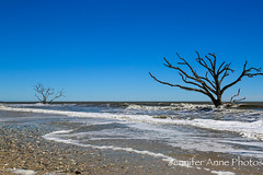 Two of a Kind (Jennifer Anne Photos) Tags: water ocean see pond blue white black beach shore shoreline tide wet trees surrounded hightide far lowtide unique view beautiful intresting coastline driftwood botanybay plantation southcarolina southern south carolina hurrican erosion damage skeletons alive dead oak oaktree