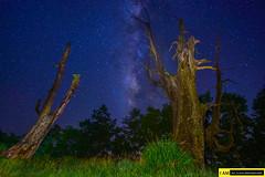 DSC_5146 (jack147az) Tags: 塔塔加 夫妻樹 銀河系 d750 1530