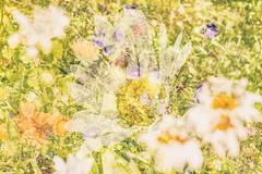Flora Plenteous 63 (pni) Tags: flower multiexposure multipleexposure tripleexposure j16 jakobstad pietarsaari finland suomi pekkanikrus skrubu pni
