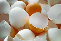No eggs at home (allejandrine) Tags: shell stillife eggs red white