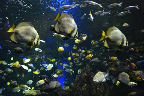 Thumbnail from Ripley's Aquarium of Canada