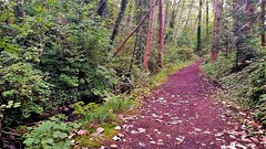 Beecher Creek Ravine (SqueakyMarmot) Tags: vancouver suburb burnaby beechercreek andrewleonggreentrail woodland nature ravine