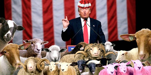 Trump: .Ah now, all you sheep. Just listen!  As for you wolves in there somewhere, I know that you will be listening VERY carefully, won't you.., From FlickrPhotos