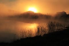 Um dia frio... (Gilda Tonello) Tags: amanhecer inverno cerrao nevoeiro