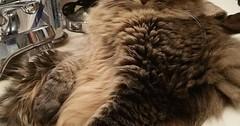 the fuck do you want? via http://ift.tt/29KELz0 (dozhub) Tags: cat kitty kitten cute funny aww adorable cats