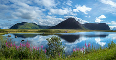 Andya (John A.Hemmingsen) Tags: landscape nordnorge clouds fujifilm flowers water reflection mountains nordland