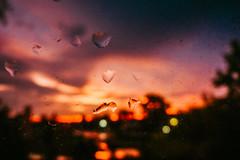 P1170745 (tatjana.kolomenchikova) Tags: sunset evening sky trees purple orange nature landscape beauty lights
