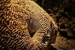 Texture (A-Rave) Tags: organic coral organicform macro natura coraldemar polyps coralmarino animalsofthesea corales naturaleza paisajeynaturaleza formaorganica corall corals ave