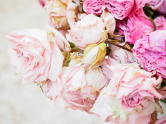 roses (deco-bots) Tags: rose hifhtkey flover omd flora pink floral summer blossom flovers olympus white stilllife bouquet nature