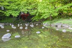 Red Hidden Among the Green (Tuck Happiness) Tags: 2016 japan spring tokyo   koishikawa krakuen garden  green trees red bridge     water reflection pond rock