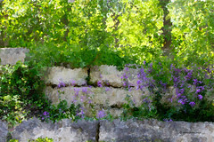 The Wall (DigiDi) Tags: painterly wall photoshop digitalpaint greenscene canvastexture digidi theawardtree secretenchantedgardens