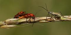 Bug Head Emperor