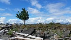 Lonesome Tree (thomaseflach) Tags: ocean tree bc spit quadra beautifulbc explorebc