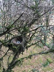 IMG_2028 (JMarshall78) Tags: nest nests ornithology birds wildlife devon