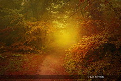 The Gravel Road (ElisSerenity) Tags: nature forest trees road autumn fall fog