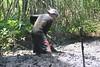 Pobladores desazolvan canales del manglar de Barra de Santiago