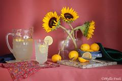 Still life with sunflowers and lemonade (Phyllis Freels) Tags: stilllife glass yellow lemon crystal availablelight napkin indoor lemonade sunflower pitcher tabletop phyllisfreels