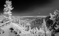 Bryce Canyon Infrared (Ed Rosack) Tags: brycecanyonnationalpark rock usa tree blackandwhite infrared clear canyon utah cliffs sky edrosack bw landscape panorama mountain ir monochrome