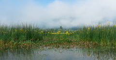 Cerknica Lake (happy.apple) Tags: dolenjejezero cerknica slovenia si cerkniškojezero cerknicalake slovenija morning fog megla močvirskigrint vodnadresen jutro summer poletje