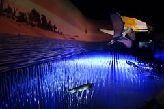 Palos de Agua 03032 (Omar Omar) Tags: pterosaurs pterosaurios ptrosaures flugsaroj flyingdinosaurs dinosauriosvoladores flugantedinosaroj dinosauresvolants lagartosvoladores nhm naturalhistorymuseum museodehistorianatural muse museo museum losangeles losngeles losangelesca losngelescalifornia la california californie usa usofa dscrx100 sonydscrx100 rx100 cybershotrx100 diorama fsil petrificado