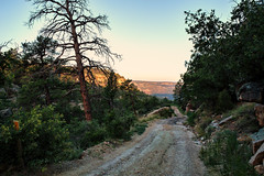 Into the Canyon (Scosanf) Tags: trip travel trees shadow summer vacation sunlight newmexico nature canon landscape eos offroad outdoor ef2470mmf28lusm goldenhour trailriding 6d millscanyon topazlabs kiowanationalgrasslands