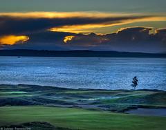 Lone Tree Sunset [1600hdr] (mjardeen) Tags: sunset sea sky water field landscape us seaside outdoor shore serene fe hdr 70200mm sonyfe70200mm4gosssunsetsony 4a7iia7m2tacomawawashingtonuniversity placegolf2015 openbeachpuget soundsaltwaterclouds2015us openmacphunaurora