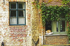 Dog life (dani_bienes) Tags: holanda amsterdam netherlands dog pet house windows blocks red orange green home travel perro mascota ventana casa art