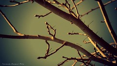 Simpleza (ojoadicto) Tags: ramas nature naturaleza tree arbol cielo invierno tarde artisticphotography