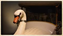 Swan Car (bert  bakker) Tags: auto swan car zwaan