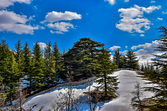 The Cedars, Lebanon (Paul Saad) Tags: cedars tree lebanon bsharri bcharre sky mountain nature landscape nikon