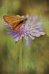 SL150616 Dvigrad 28 (Sh4un65_Artistry) Tags: animals artwork bugs croatia croatiaholiday2016 digitalart digitalpainting events painteffect paintedphoto painterly places textured topaz topazimpression topaztextureeffects moth