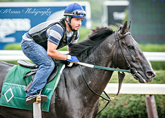 Mott Trainee (EASY GOER) Tags: horse equine racing sports thoroughbreds canon 5dmarkiii 400mm 56 belmont park races workouts