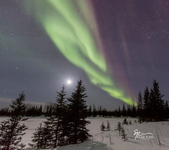 Northern Lights (Sean Pinn Photo) Tags: winter snow canada colour night dark stars lights nt nwt late northwestterritories northernlights auroraborealis hayriver northerncanada auroraphotography