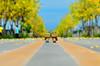 阿楞們 漫步在 [ 阿勃勒X大道 ] (Eson Huang) Tags: nikon taiwan kaohsiung 高雄 dando yotsuba 阿勃勒 四葉妹妹 danboard 阿愣 紙箱人 阿楞 d5100