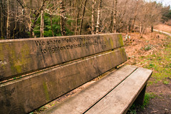 We share lifes journey along this path... (Fleety Vision) Tags: forest bench quote delamere