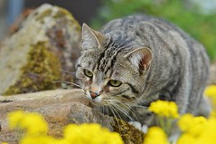 Cleo spotted a little bug in the stonegarden :-) (s_un_flower44) Tags: macro nikon cleo d3200 tamronsp90mm bestofcats