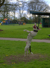 Sherdley Park Dog (Keithjones84) Tags: park dog dogs sthelens sherdleypark