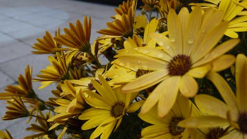 Flowers, Chobham Academy