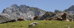 _MG_0028 (xabelmesa) Tags: mountain mountains spain picosdeeuropa macizooccidental rondiella