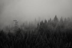 Magic Moment (Joshua Johnston Photography) Tags: oregon pacificnorthwest pnw joshuajohnston mthoodnationalforest canon6d blackandwhite bnw landscapephotography nature trilliumlake
