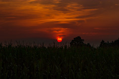 Sunset (betadecay2000) Tags: ta dlmen germany autumn herbst nebel dawn sonne sol mnsterland himmel rot morgenrot sun sunrise europa europe i love flickr idylle sky countryside country fog foggy oktober october 2015 outdoor sonnenuntergang dmmerung heiter sunset dusk