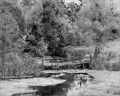 2016-07-10   004-01web7 (Yuriy Sanin) Tags: yuriy sanin congo4008 foma d2313 blackandwhite river trees bridge bushes tina           nagaoka 4x5 largeformat landscape