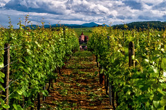 Route de Vins (Don Csar) Tags: france green church vineyard europa europe hill iglesia alsace colina francia cluds ribeauvill puntodefuga viedos parras hunawihr wineroute rutadelvino vinogble