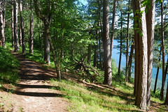 Preacher's Grove (mike_jacobson1616) Tags: itascastatepark itasca minnesotastatepark minnesota pines whitepine preachersgrove