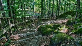 Bøkeskogen i Larvik