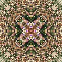 Kaleidoscopic Floral 3.0 (Ursa Davis) Tags: abstract art artist artwork color colorful creative davis decor digital dutch eclectic europe field fine flora floral flower flowers for green happy holland home hyacinth kaleidoscope kaleidoscopic keukenhof leaves manipulation mix modern nature netherlands photo photographer photography photoshop pink plant pretty purchase red reflection sale tulip tulips ursa ursadavis wwwursadaviscom