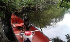 Paddeln auf der Schwentine (runlama) Tags: paddeln boot boat kanu schwentine holsteinische schweiz wasser water baum tree dog hund eurasier milla